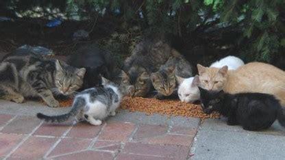 cathouse lincoln ne lincoln s cat house newsroom of nebraska