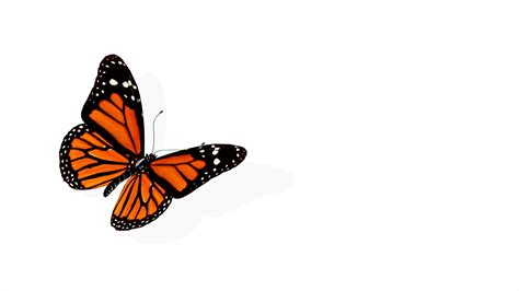 Butterfly Animation Motion Background Videoblocks Images Of Animated Butterflies