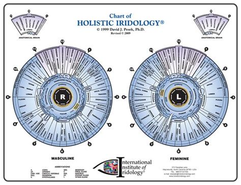 printable iridology eye chart pinterest the world s catalog of ideas