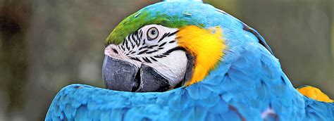 parrot care sheet supplies petsmart