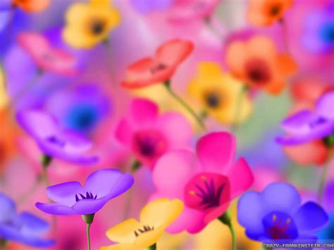 colorful wallpapers of flowers colorful flowers wallpaper 1024x768 4865