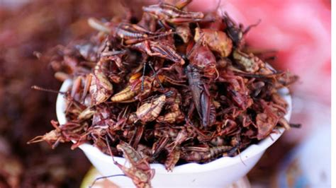 Would You Eat This Grasshopper Snack by Mexican Grasshoppers The Food Culture