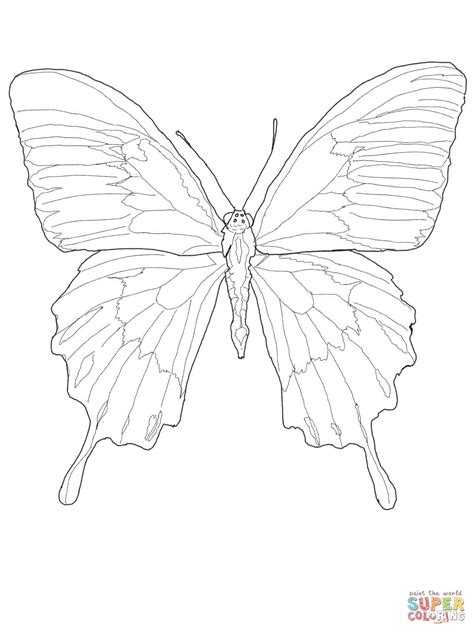 Dibujo de Mariposa Ulises para colorear | Dibujos para