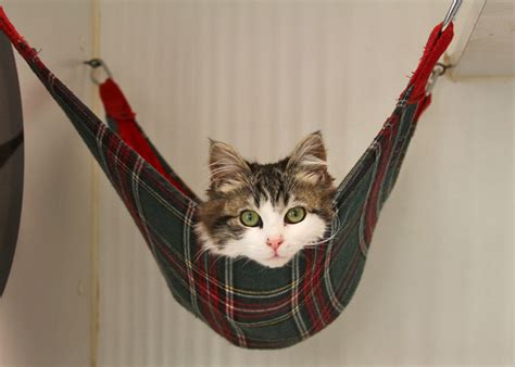 Hammocks For Cats animal mash ups hammock kittens v matthew mcconaughey