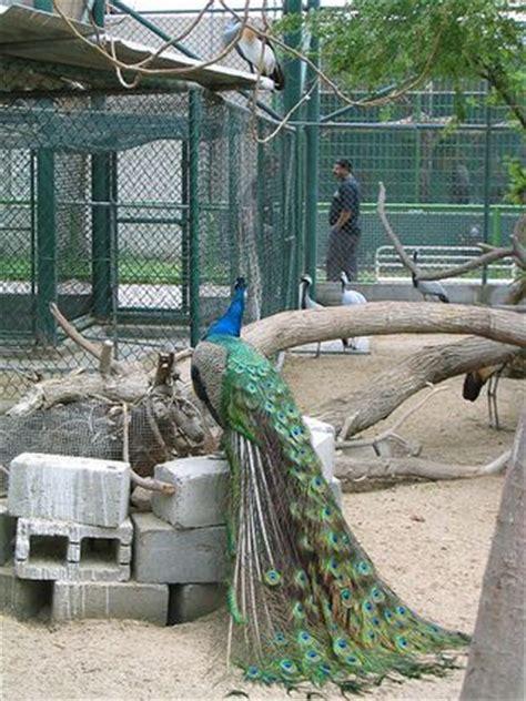 emirates zoo entry fee dubai zoo entrance fee browse info on dubai zoo entrance