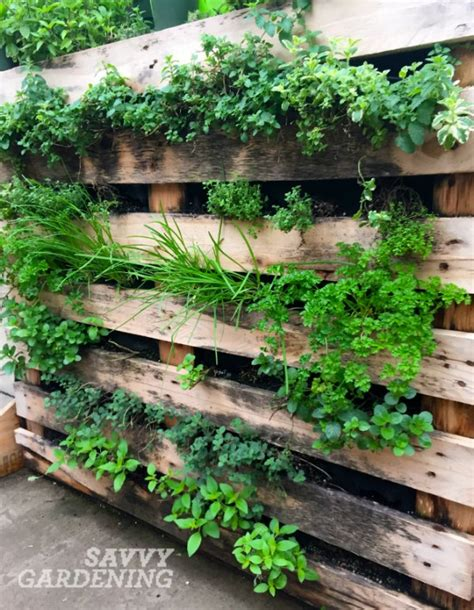 Vegetable Garden In Pallet Vertical Vegetable Garden Ideas
