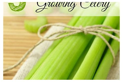 try celery coupon