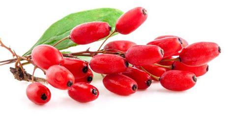 manfaat goji berry untuk diet manfaat buah goji berry artikel kesehatan part 3