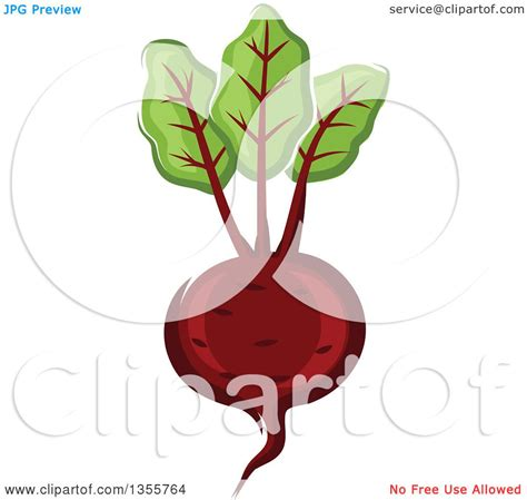 beet clipart clipart of a beet royalty free vector