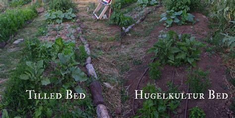 hugelkultur bed the hugelkultur bed experiment update dog island farm