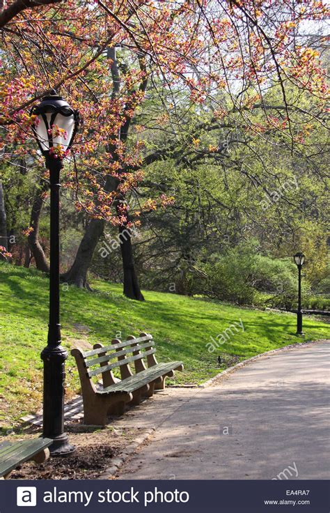 buy a bench in central park spring blossoming tree and bench in central park new york