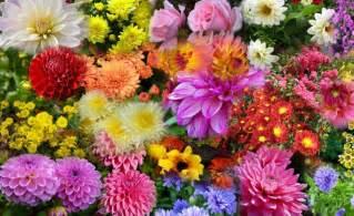 Flower In Bloom flowers that bloom in autumn in the garden