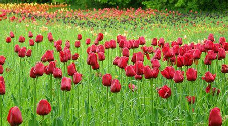 Britzer Garten M44 by The 2 Oasis Enjoy Blooms Year In Berlin S
