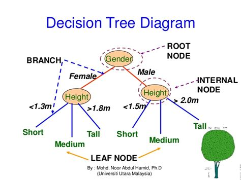 tree and leaf diagram leaf diagram to label leaf anatomy elsavadorla