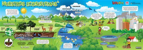 las cadenas migratorias definicion ecosistemas y su estructura