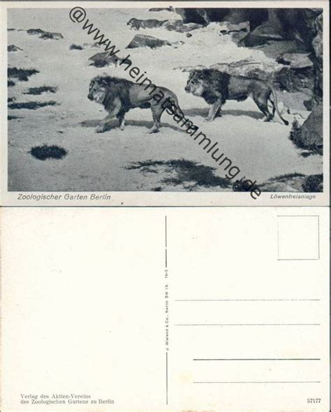 Zoologischer Garten Berlin Aktie by Historische Ansichtskarten Tiere Zoologischer Garten Berlin 02