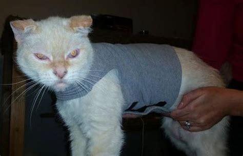 diy cat clothes diy cat anxiety shirt petdiys