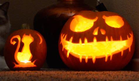 cat pumpkin skeleton and cat pumpkin time lapse pumpkin