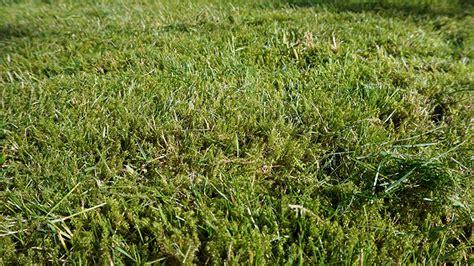 Wie Moos Im Rasen Entfernen 5110 by Rasen Vertikutieren Ratgeber Rasen Richtig Vertikutieren