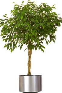 Home Interior Plants interior designers houston on decorative indoor house plants home