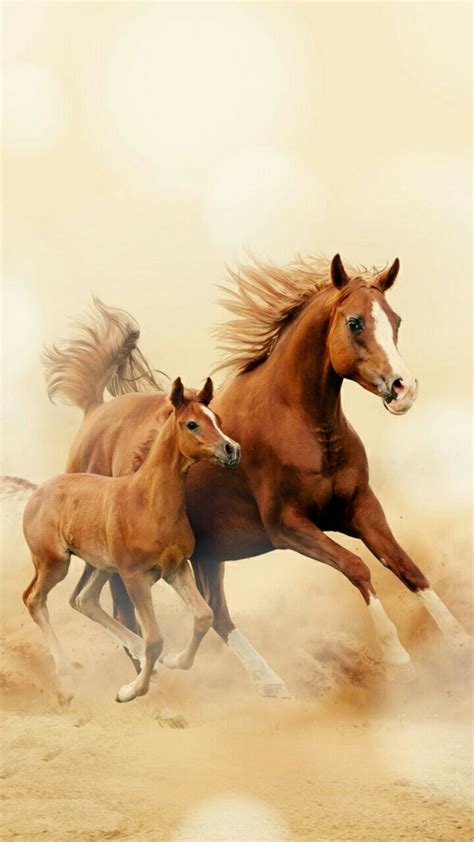 girly horse wallpaper running horse wallpaper