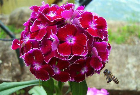 file red flower png wikipedia the free encyclopedia imgstocks com