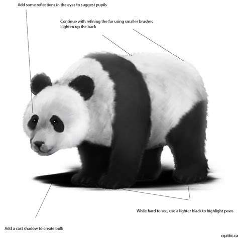 Panda Outline Drawing by How To Draw A Panda In 4 Steps With Photoshop