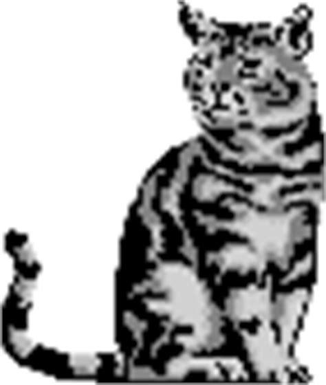katzenjahre in menschenjahre tabelle tierschutzverein m 252 lheim an der ruhr e v tiere katzen