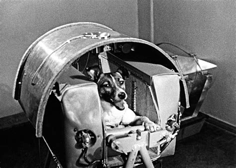 laika space remembering laika space and soviet the new yorker