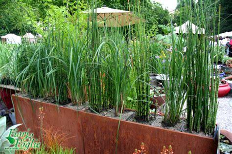 piante alte da terrazzo un angolo fra le ninfee ecco il terrazzo acquatico di