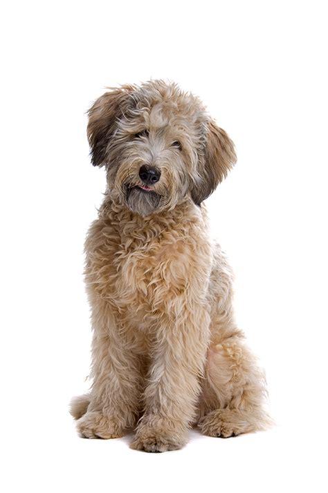 enrofloxacin for dogs enroflox 174 injection for dogs 2 27 enrofloxacin