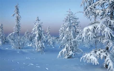 frozen winter wallpaper frozen trees wallpaper 17050