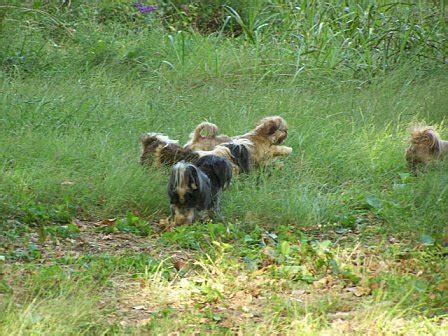 shih tzu puppies birmingham al free shih tzu puppies in birmingham al
