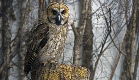 owl symbolism pure spirit owl spirit animal totem symbolism and meaning