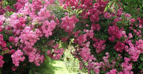 Rosenbogen Garten by Rosenbogen Aufstellen Mein Sch 246 Ner Garten