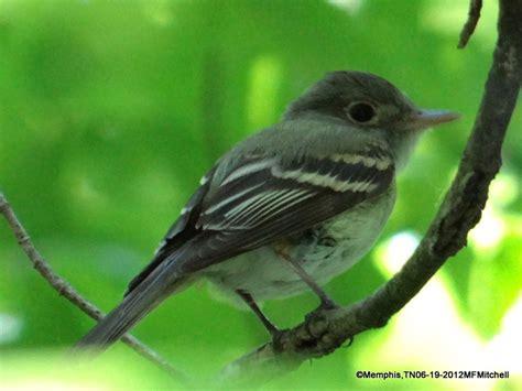 tn bird bird identification help tn bird freelists