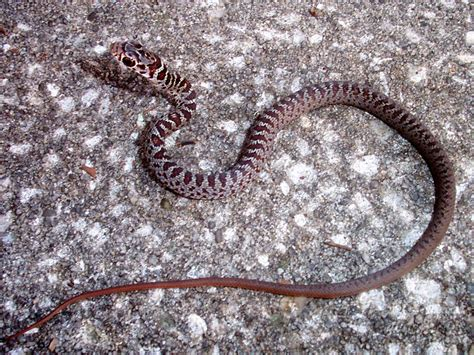 Garden Snake In Basement Found A Small Snake In The Basement Yesterday Yikes