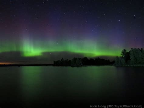 Northern Lights Mn by Day 217 Northern Lights Boulder Lake 365 Days Of Birds