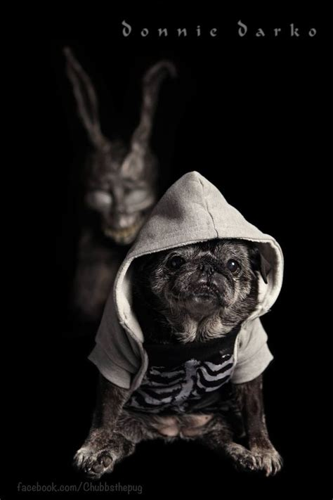 chubbs the pug 17 best images about chubbs the wug on this