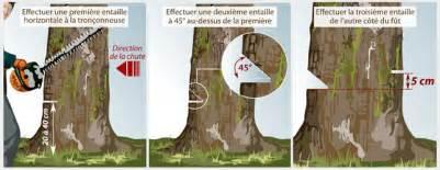 comment couper un arbre ooreka