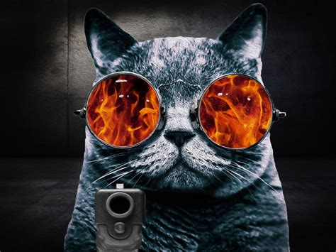 wallpaper cat 3d glasses cat glasses rage cat oil painting by stevewoods69 on