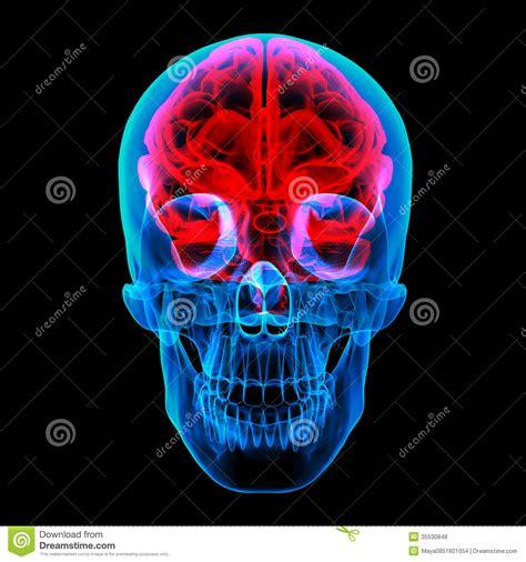 brain x human brain x royalty free stock photos image 35530848