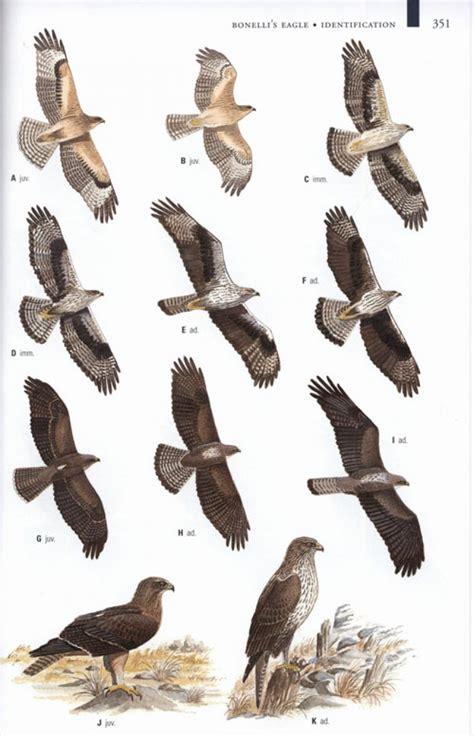 collins birds of prey 0007248148 9780007248148 nhbs
