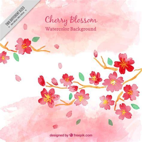 fiori di ciliegio dipinti acquerello fiore di ciliegio sfondo scaricare vettori gratis