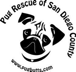 pug adoption san diego pug rescue of san diego county presents pugs chugs march 3 2012 kpbs