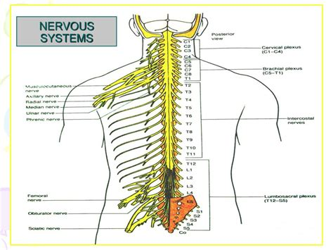 section 35 5 drugs and the nervous system ppt positioning in operating theatre powerpoint presentation id 225230