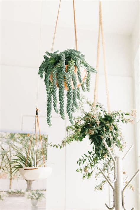 Hanging Plants Indoor 1000 Images About Green Wedding On Mint Green