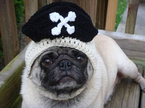 knitted hats for dogs knit hats for your things