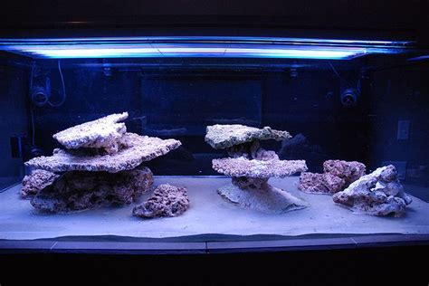 Saltwater Aquarium Aquascape by 1000 Images About Reefscape On Reef Aquarium