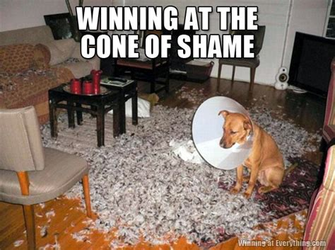 Cone Of Shame Meme - dooce com page 98 mommy daddy bloggers gomi forums